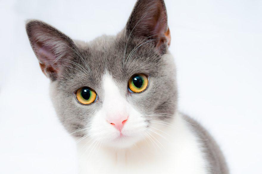 animal-animal-photography-cat-104827