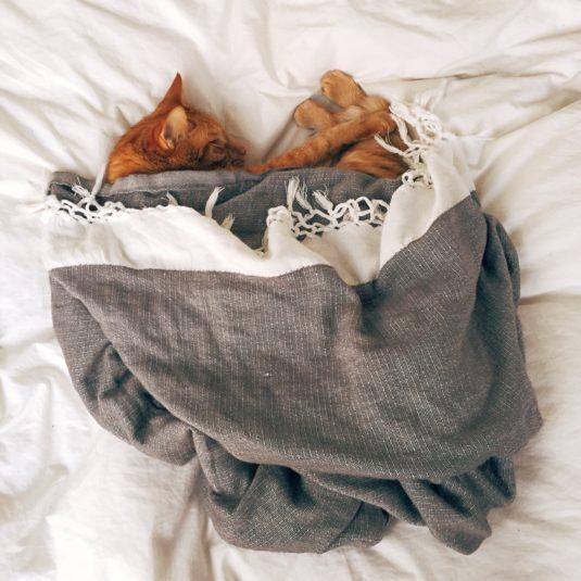 animal bed cat 103651 1