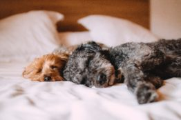 animals bed calm 57627